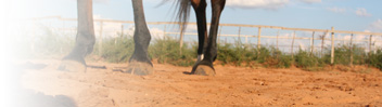Refuge Services - Equine-Assisted Psychotherapy, Hippotherapy, Theraputic Riding